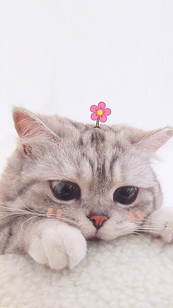 45 cute and funny cat wallpapers aesthetic iPhone ...
