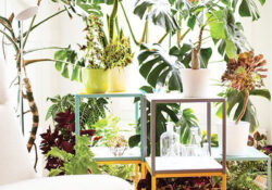 40 Eye-catching Plant Setting Ideas To Beautify Your Interior