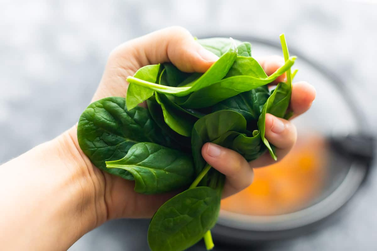 Hand holds fresh spinach